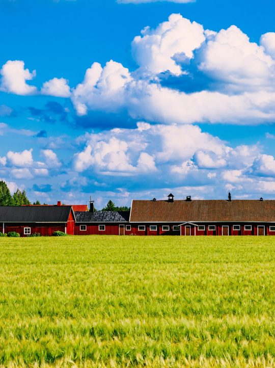 Red farm buildings and green field of summer wheat in rural Finland